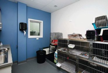 Vet clinics – A black market with astronomical prices
