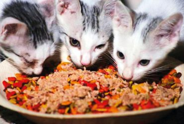 Dubai could soon have feeding stations for stray cats