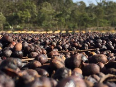 New Single Origin Coffee: Ethiopia Sidamo Nansebo Bulga